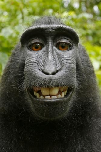 selfie taken by the monkey